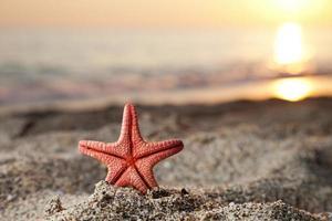 estrela do mar na praia de areia do mar foto