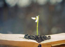 flor da primavera em livro aberto