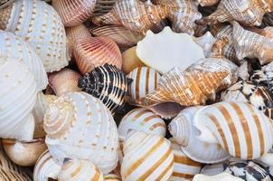 Concha do mar