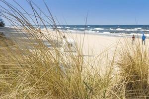 duna com grama de praia em primeiro plano. Mar Báltico. foto