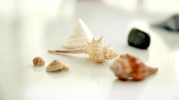 conchas do mar em fundo branco foto