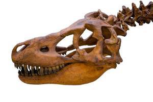 crânio de esqueleto de tiranossauro rex isolado no fundo branco foto