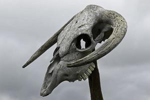 crânio de boi sacrificial, parte de um ritual pagão.