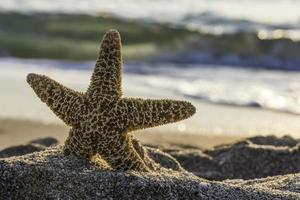 nascer do sol na praia. foto