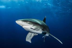 olho de tubarão