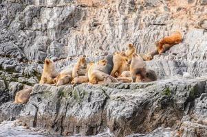 animais no canal beagle, tierra del fuego