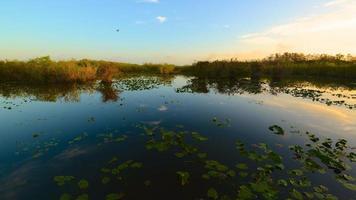 pântano no parque nacional Everglades