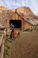 celeiro mórmon histórico com cavalos no parque nacional do recife do capitólio utah
