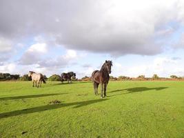 novos cavalos de outono do parque nacional da floresta foto