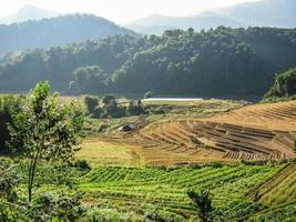 agricultura em doi inthanon national park