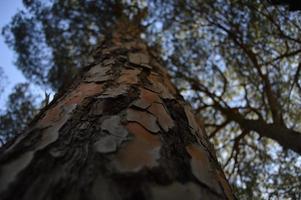 grande tronco de árvore