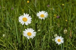 flores silvestres no parque nacional de acádia em maine