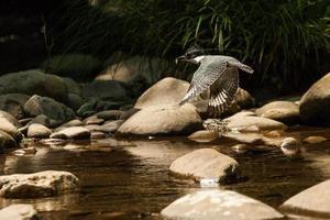 martinho pescatore