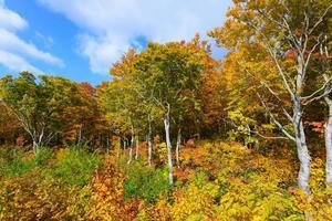 folhagem de outono em aomori, japão