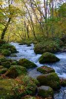 outono de oirase gorge em aomori, japão