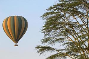 voando em um balão verde e amarelo perto de uma acácia