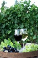 vinho tinto e branco com uvas na natureza