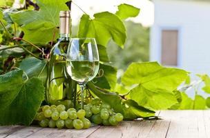 uva verde e vinho branco na vinha foto
