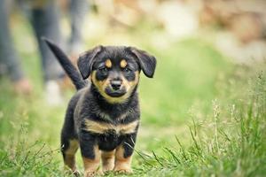 filhote de cachorro pequeno foto