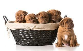 ninhada de cachorrinhos foto