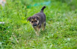 jovem cachorrinho feliz