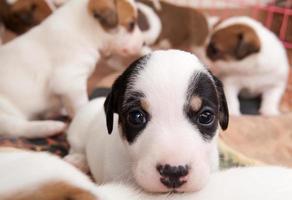 cachorros de 2 meses foto