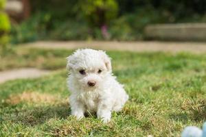 cachorro sentado na grama foto