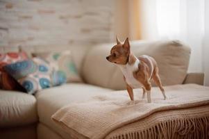 cachorro no sofá com almofada colorida foto