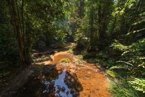 floresta tropical de bornéu foto