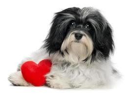 amante dia dos namorados cachorro cachorro