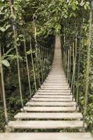 ponte de corda na floresta tropical foto
