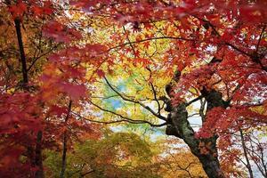 Japão. Arashiyama foto