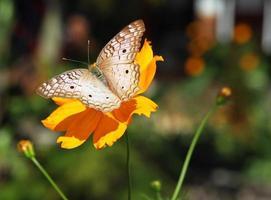 linda borboleta foto