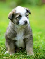 filhote de cachorro no quintal foto