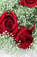 rosas vermelhas e respiração de bebê foto