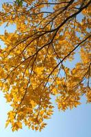 folhas de outono foto