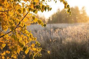 amanhecer de outono foto