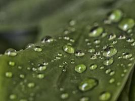 gota de chuva em folha após tempestade foto