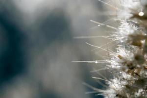 desfoque e foco suave da flor da grama com gotas de água