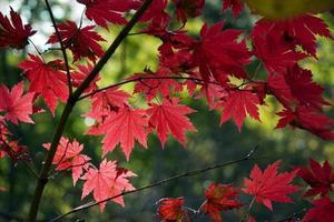 cor de outono foto