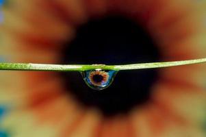 olho de flor