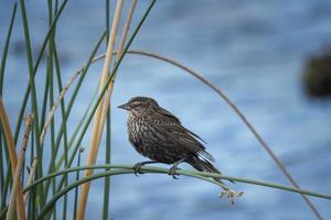pássaro marrom empoleirado em planta verde