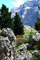 Val gardena - Alpes Dolomitas no verão foto