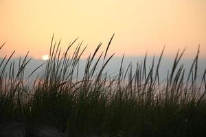 grama alta da praia