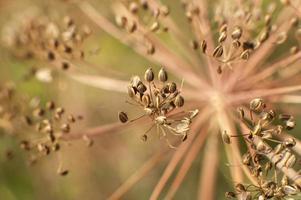 close-up de especiarias e ervas foto