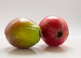 cacto maçã. foto