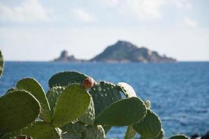 Insel mit Kaktus