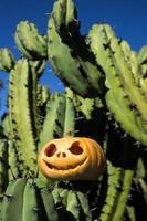 abóbora assustadora de halloween no fundo de cactos