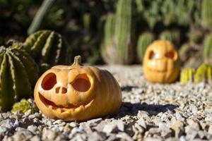abóboras assustadoras de halloween no fundo dos cactos
