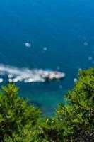 plantas com folhas verdes cruzando um barco em um corpo d'água